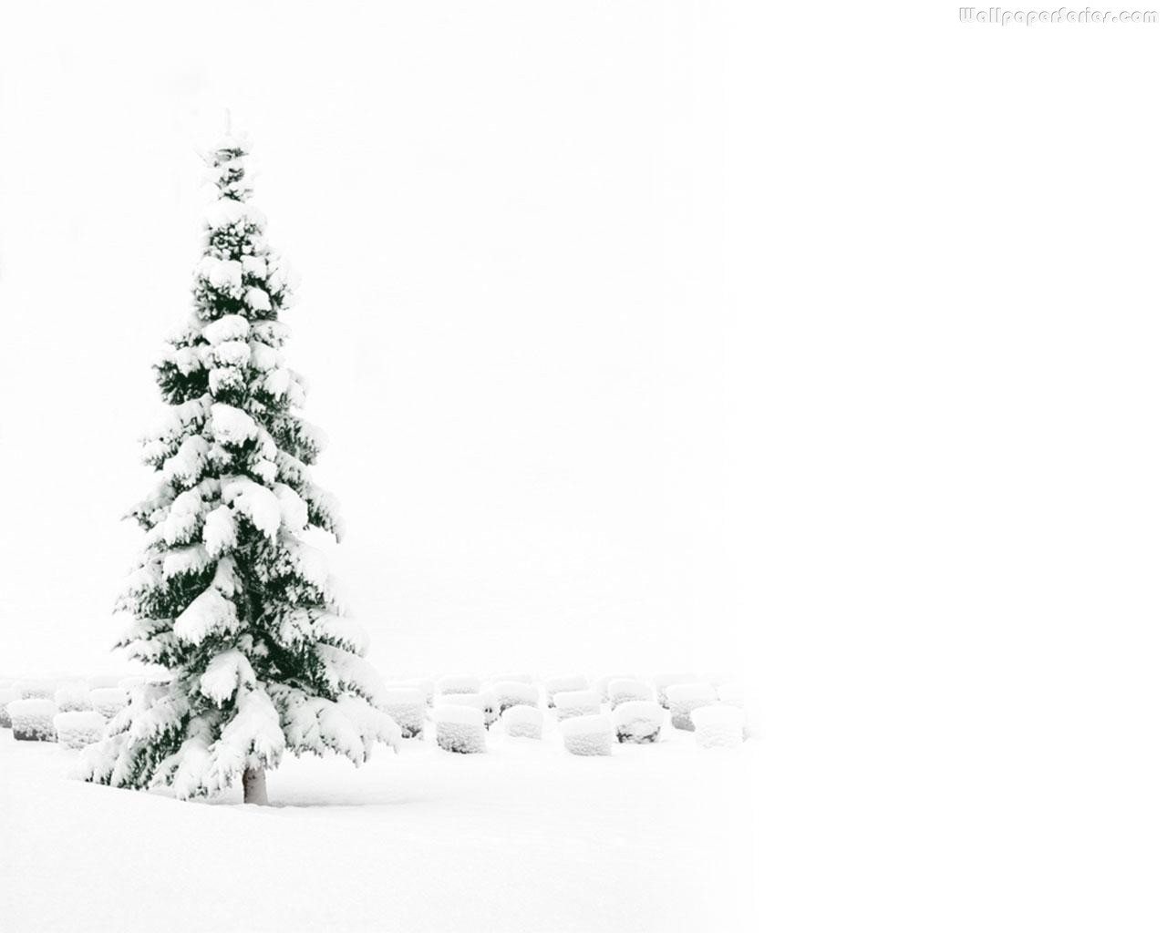 White-Christmas-Tree-Wallpaper-02 • Webcasting And Online